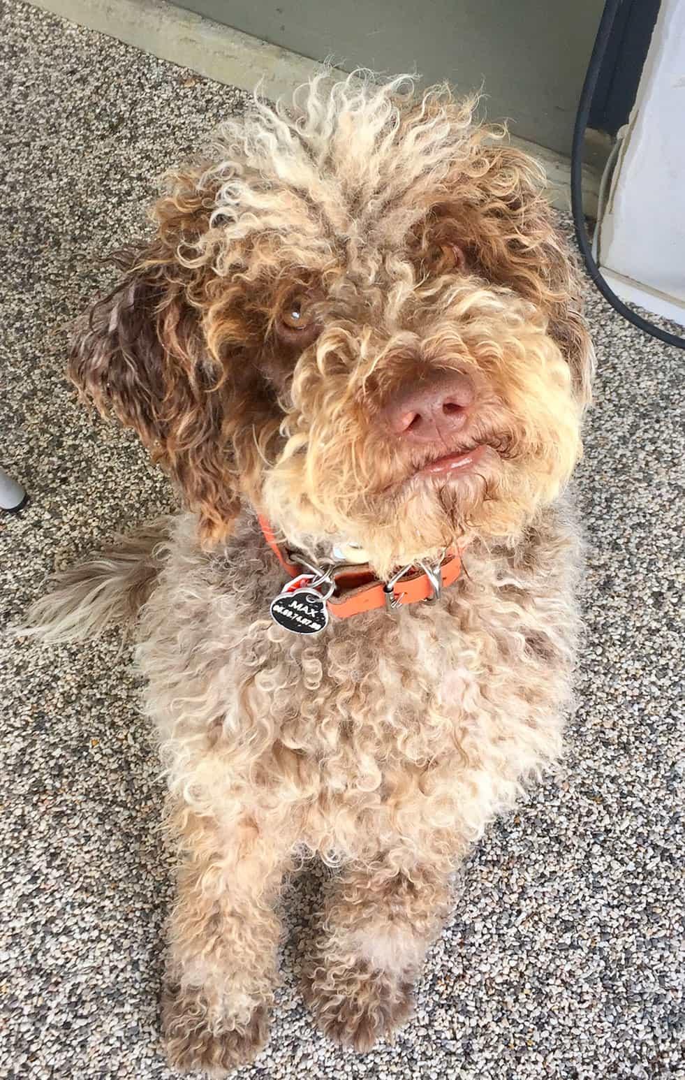 Max, le chien de votre chambre d'hôte en Luberon, Metafort Provence